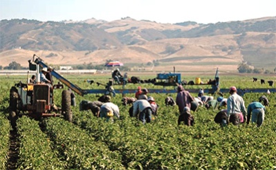 migrant-workers